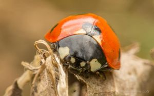If in doubt, post a ladybug by photojrs
