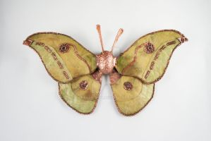 Tussah Moth, Silk Moth Series by CopperMoth