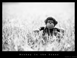 Monkey in the Grass by SemiGekkoHuman