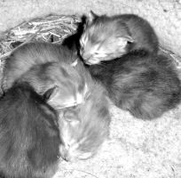 """""""Kittehs"""" by ilovelucy365"""
