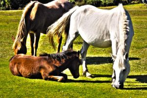 New forest ponies by LubelleCreativeSpark