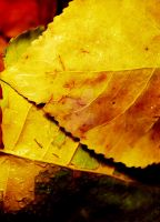 Layers of Leaves In House by houstonryan