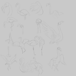 Flamingo Sketches by Messenger-Pigeon