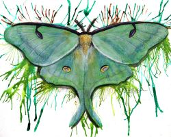 Luna Moth by LuxDani