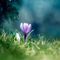 spring by maticgolob