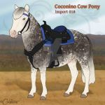 Coconino Cow Pony - Import 018 (SOLD) by daggerstale