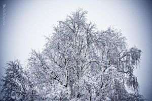 Winter by PaalM