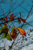 autumn colours by thelastrunaway