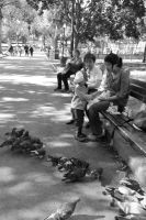Pigeon Social In the Park 7 by Miss-Tbones