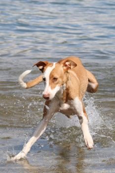 Dog Stock 12 by Malleni-Stock