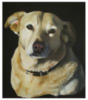 Bonny by petportraitman