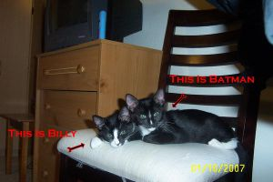 My Two Cats Billy and Batman by cdmalcolm