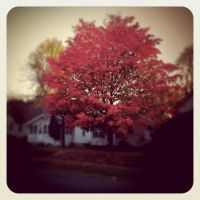 Indian Summer by julieomg