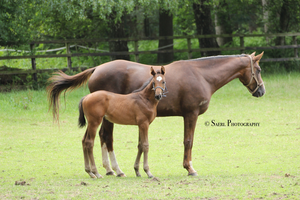 Wilma and foal Stock 1 by Saerl