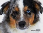 Eyes of an Aussie by deerhunter2012