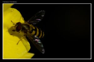 wasp 2 by tomba76