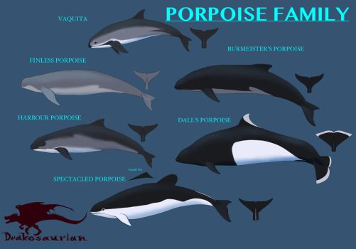 Porpoise Family References by Drakesaurian