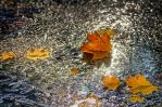 The colors of Fall... _89_ by my-shots