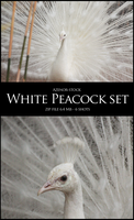White Peacock Set by Azenor-stock