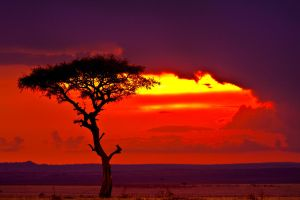 My Africa 20 by catman-suha