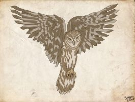 Owl by ServantofEntropy