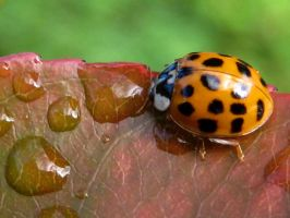 Ladybird 10 by iriscup