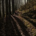 Long Shadows by EvaPolly