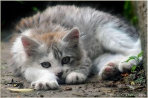tired kitten by brijome