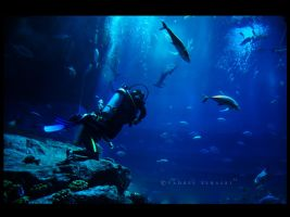 Underwater World by Saher4ever