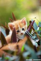 Kitten And Flower 1.1 by adrianhefni