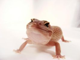 Abbigale My Sweet Gecko 4 by creative1978