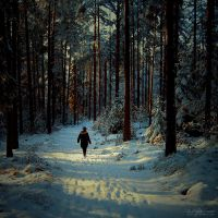 ENCHANTED WINTER by JTphoto