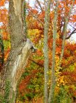 Shades of Autumn 2014.XII by MadGardens