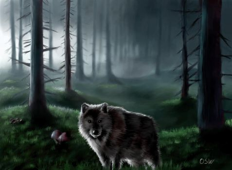 Old wolf by OSW