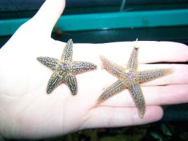 Baby Starfish in Aqualab by Malakhite