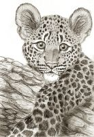 Leopard Cub Drawing by OnTheMountainTop