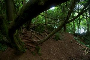 Puzzlewood 07 Stock by lokinststock
