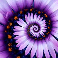 Floral Spiral 1 by zaphotonista