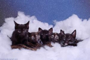 kittys in the sky by hoschie