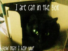 I are Cat in the Box by EternalxFantasy