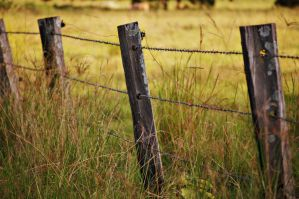 The Old Wooden Fence by game-breaker