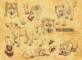 Wolf Sketches by Jenrocks4ever