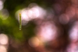 Macro bungee by dijow