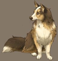 sheltie by tirnu