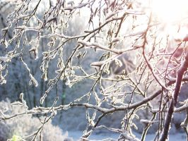 Branches In The Winter Sun by Treelz