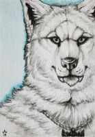 C-T-Elder ACEO by Woodenbullet