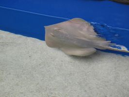 sting ray by Fallonkyra