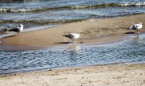 121025 Seagull Shore by TalizmynVox