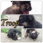 Troop by Mel2108