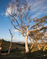 Cattle Country by FireflyPhotosAust